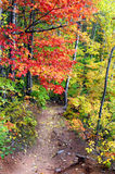 Autumn on Hungarian Falls Trail Royalty Free Stock Photo