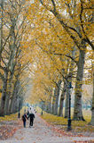 Autumn in Hyde Park in London Stock Photos