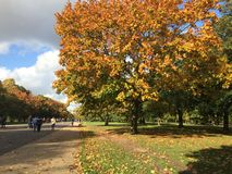 Autumn - Hyde Park London Royalty Free Stock Images