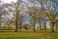 Autumn in Hyde Park, London Royalty Free Stock Images