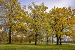 Autumn in Hyde Park, London Royalty Free Stock Image