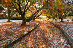 Autumn Ice Foto de Stock