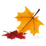 Autumn icon. Abstract autumn icon with falling leafs on white Stock Photography