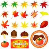 Autumn icon Royalty Free Stock Images