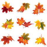 Autumn icon set. Fall leaves and berries. Nature symbol  c. Ollection isolated on white background Stock Photo