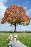 Autumn idyllic city getaway spot. Red tree and blue sky Royalty Free Stock Photography