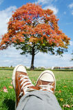 Autumn idyllic city getaway spot. Red tree and blue sky Stock Photo