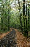 Autumn II. Broad-leaved forest in autumn Royalty Free Stock Image