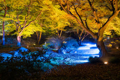 Autumn illumination. At Rikugien Garden Royalty Free Stock Photos