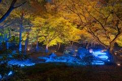 Autumn illumination stock image