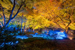 Autumn illumination. At Rikugien Garden Stock Photos