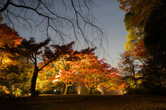 Autumn illumination. At Rikugien Garden Royalty Free Stock Photography