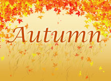 Autumn Illustration. Autumn text with falling leaves and grass Stock Photography