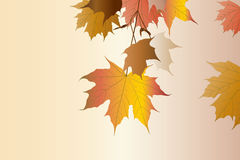 Autumn. Royalty Free Stock Photos