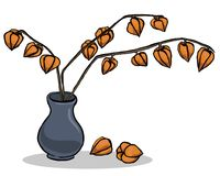 Autumn illustration with inflorescence physalis. Stock Image