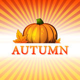 Autumn illustration with pumpkin and fall leaves and rays Royalty Free Stock Photo