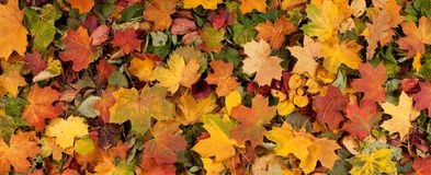 Autumn image with different fallen leaves Stock Images
