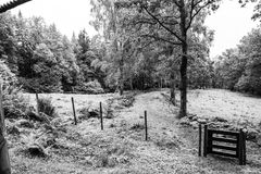 Autumn forest and trees. Autumn images in colorful feeling, forest and field black and white Stock Photos