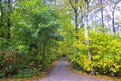 Autumn Impression from the Saxony forest, near Hamburg. Germany Stock Image