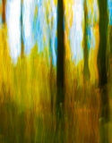 Autumn impressions. Impressionist style photograph of an autumn forest. The effect is achieved by using a slow exposure and vertical hand-panning the camera Stock Images