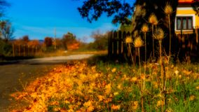 Autumn Impressions. It`s autumn and all the trees and grass has changed colors stock images