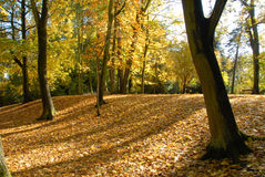 Autumn In An Park Royalty Free Stock Images