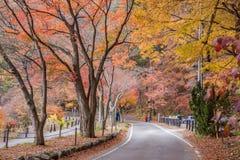 Free Autumn In Kawaguchiko Royalty Free Stock Photos - 76288258