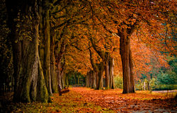 Free Autumn In The Forest Royalty Free Stock Images - 2905639