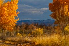 Autumn In The Grand Valley Royalty Free Stock Photo