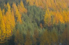 Autumn In The Natural Park. Stock Image
