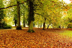 Free Autumn In The Park Stock Image - 45781001