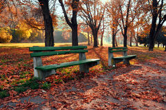 Free Autumn In The Park Stock Images - 64048744