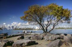 Free Autumn In Tokyo Bay, Japan Stock Image - 162339711