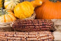 Autumn Indian Corn Stock Photos
