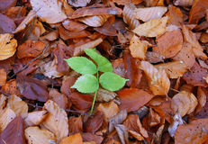 Autumn individualist Royalty Free Stock Images