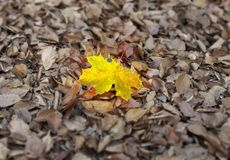 Autumn individuality Royalty Free Stock Photos