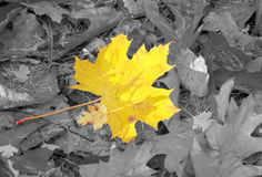 Autumn individuality royalty free stock images