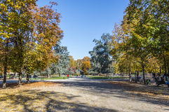 Autumn in Indro Montanelli's Park Stock Photo