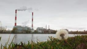 Autumn Industrial-landschap - thermische elektrische centrale over de rivier, het ecologieconcept, de bloemen en het gras in de v stock videobeelden
