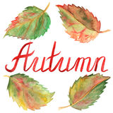 Autumn ink lettering typographic green yellow red leaves set isolated Royalty Free Stock Photo