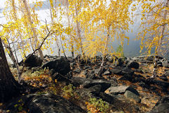 Autumn on the island. Royalty Free Stock Photography