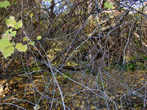 Autumn island Calarasi. The forests of willows, alders, elms, poplars, shrubs, vines covered with autumn leaves paths stock images