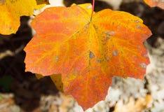 Autumn in Italy 01 royalty free stock photos