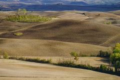Autumn in Italy. Yellow plowed hills of Tuscany with interesting shadows and lines. Agricultural concept landscape stock image