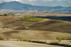 Autumn in Italy. Yellow plowed hills of Tuscany with interesting shadows and lines. Agricultural concept landscape stock photo
