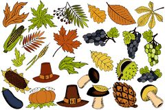 Autumn items for Thanksgiving in the vector stock illustration