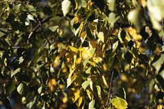 The autumn, its trees with sheets. Leaves of colors stock image