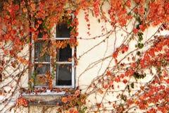 Autumn Ivy Royalty-vrije Stock Afbeeldingen
