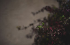 Autumn Ivy Royaltyfri Fotografi