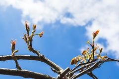 Autumn Ivy Vine produces new leaves in Spring seen against sky 3 Royalty Free Stock Image